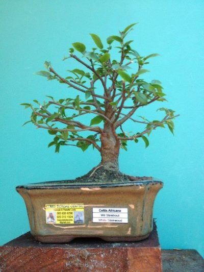 Ceres Bonsai Centre