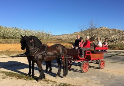 Op-Die-Berg  Horse and Carriage Rides