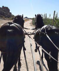Op-Die-Berg  Horse and Carriage Rides