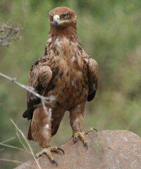 Witzenberg Bird Club
